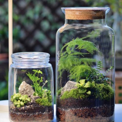 Crée ton terrarium